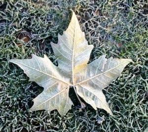 an icy leaf on frozen grass