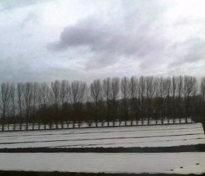 Snow or no snow? outskirts of Ely on Tuesday