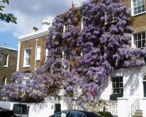 A house of flowers in Kensington